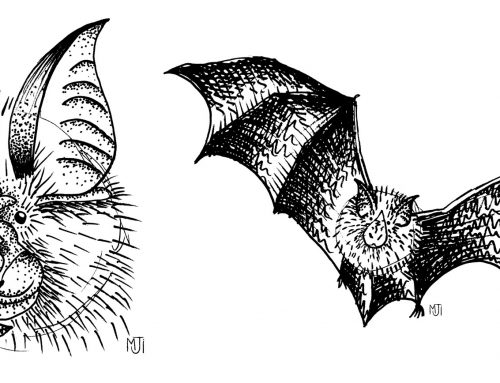 Draw along a horseshoe bat